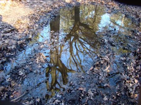 Plas+met+reflectie+van+bomen